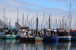 The many fishing vessels of Hout Bay harbour. Photo by Luke Lisiecki.